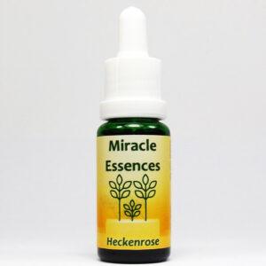 Heckenrose Blütenessenzen Miracle Essences