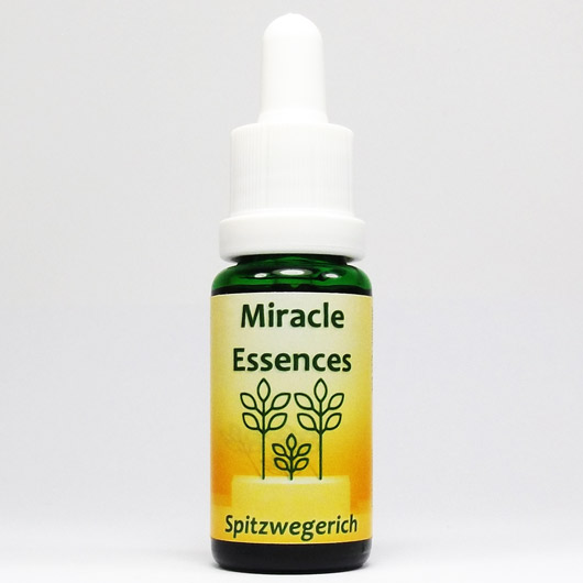 Spitzwegerich Blütenessenzen Miracle Essences