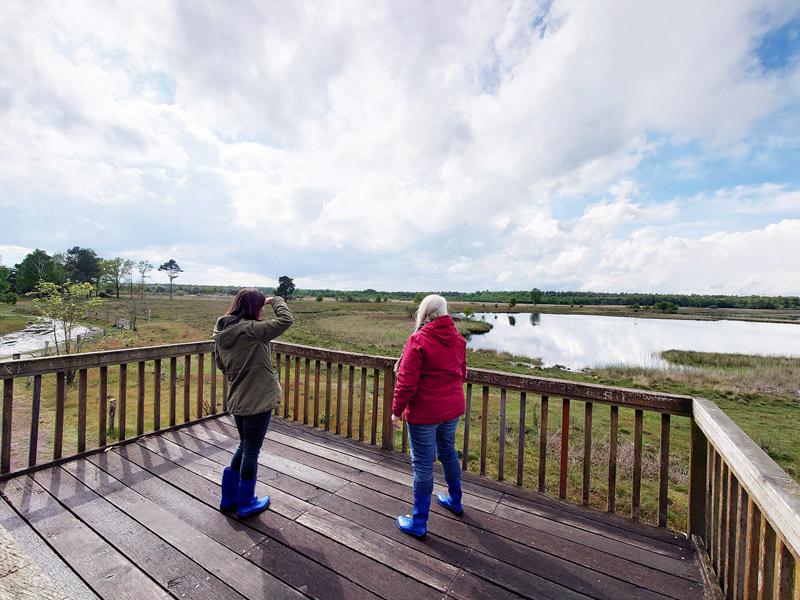 Naturschutzgebiet bei Bad Bentheim für die Birkenessenz