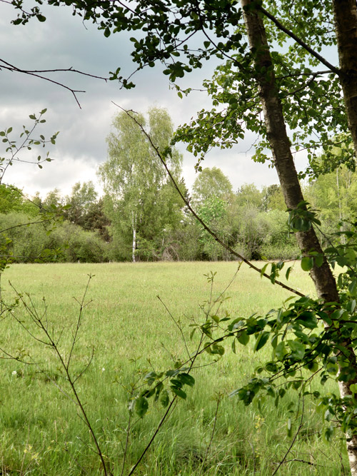 Birke Bad Bentheim für die Baumessenzen